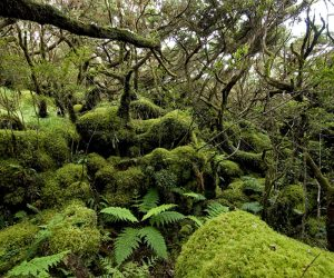 1_FRCT_Natural Forest_SIARAM