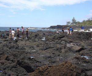5_UR_Anchor-project-3.4-Coastal-habitat-survey-with-students-(D.-Strasberg)