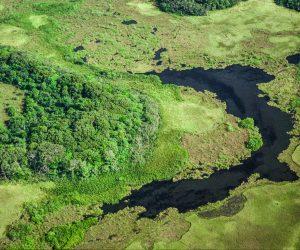 Aerial view of the Yiyi wetlands. French Guiana