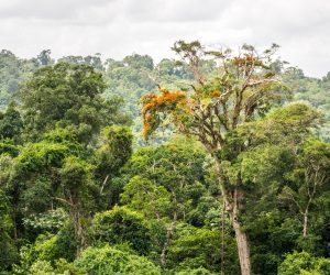 Canopy of the Amazonian Forest.
